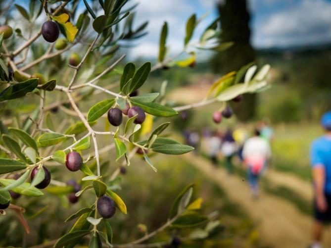 Olive Tasting